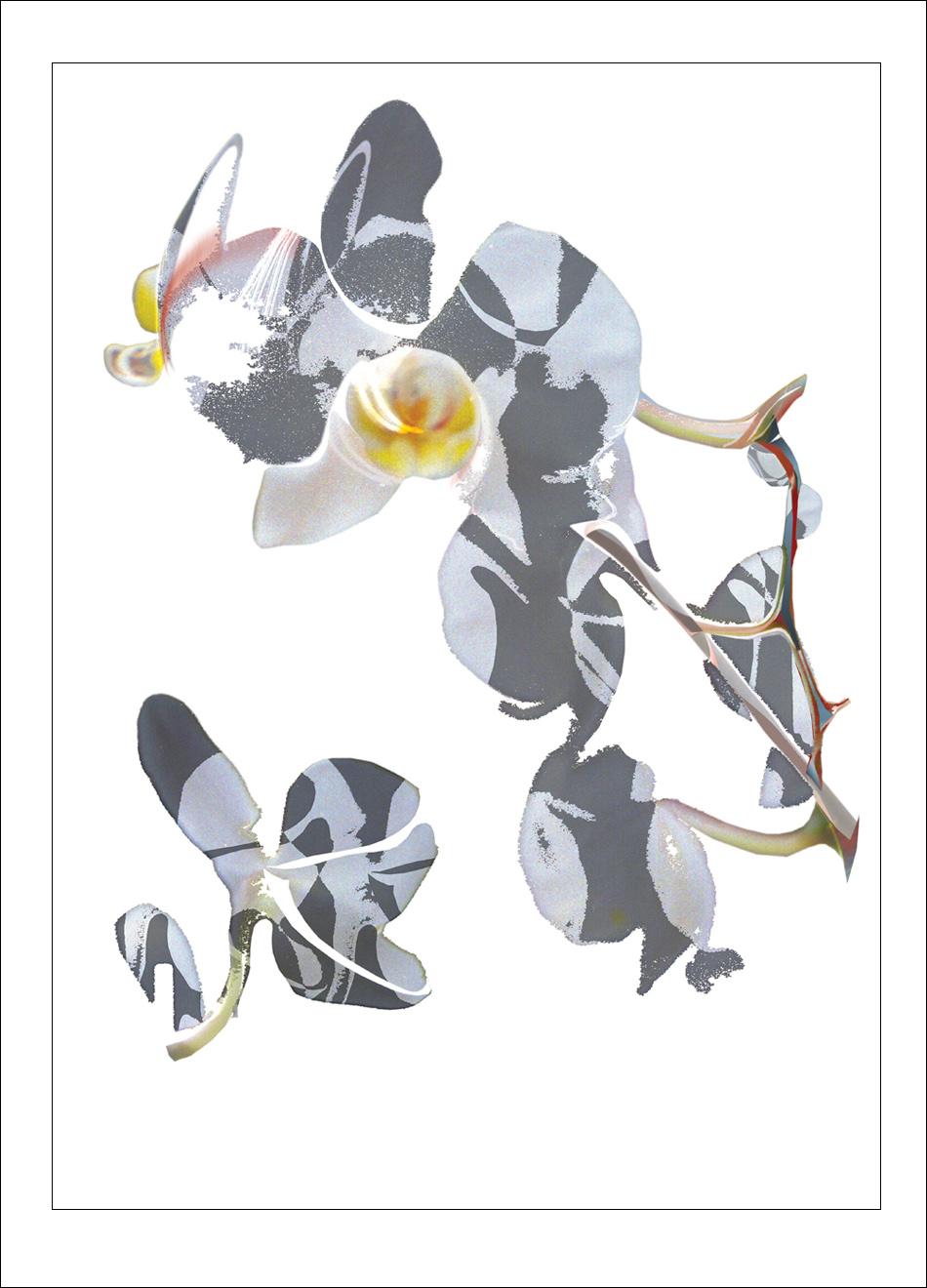 Blue Orchid Tom Manley artwork